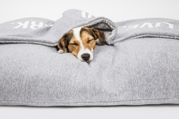 51DN Sweater Hundekissen Pillowbag